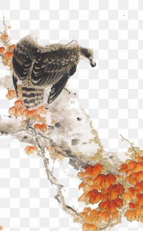 Eagle - Mountain Hawk-eagle Bird Mountain Hawk-eagle PNG