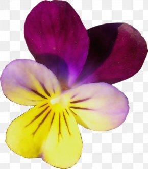 Wildflower Viola - Flowering Plant Petal Flower Violet Wild Pansy PNG