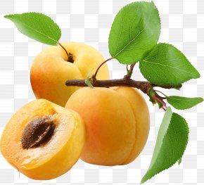 Peach Image - Apricot Peach PNG