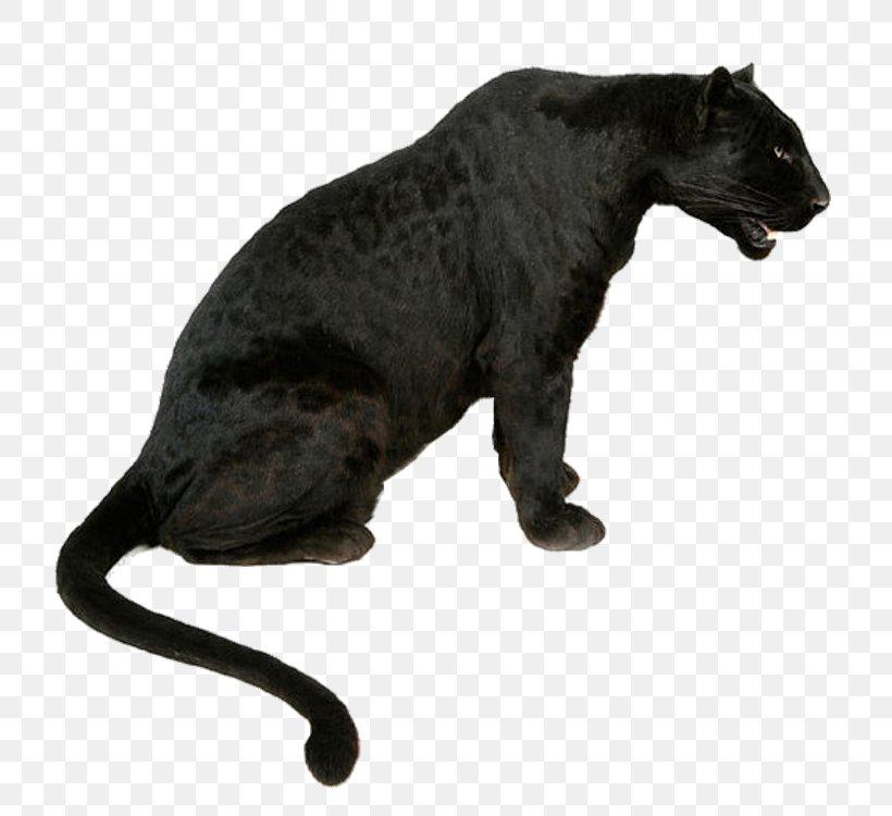 Leopard Tiger Jaguar Black Panther Lion, PNG, 750x750px, Leopard, Bengal Tiger, Big Cat, Big Cats, Black Download Free