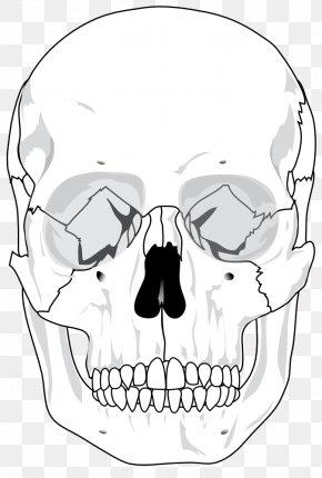 Skull Heads Pictures - Skull Human Skeleton Anatomy Bone Diagram PNG