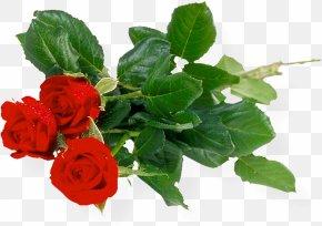 Rose Bunch Transparent Background - Rose Clip Art PNG