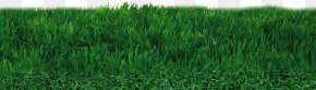 Field Transparent - Lawn Football Pitch Artificial Turf PNG