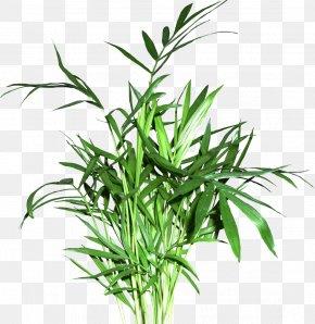Plant - Sweet Grass Flowerpot Plant Stem Grasses Tree PNG