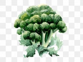 Broccoli - Broccoli Watercolor Painting Drawing Illustration PNG