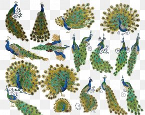 Peacock Design - Embroidery Peafowl Cross-stitch Feather Handicraft PNG