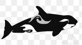 How To Draw Killer Whale - Cat Clip Art Killer Whale Dolphin Mammal PNG