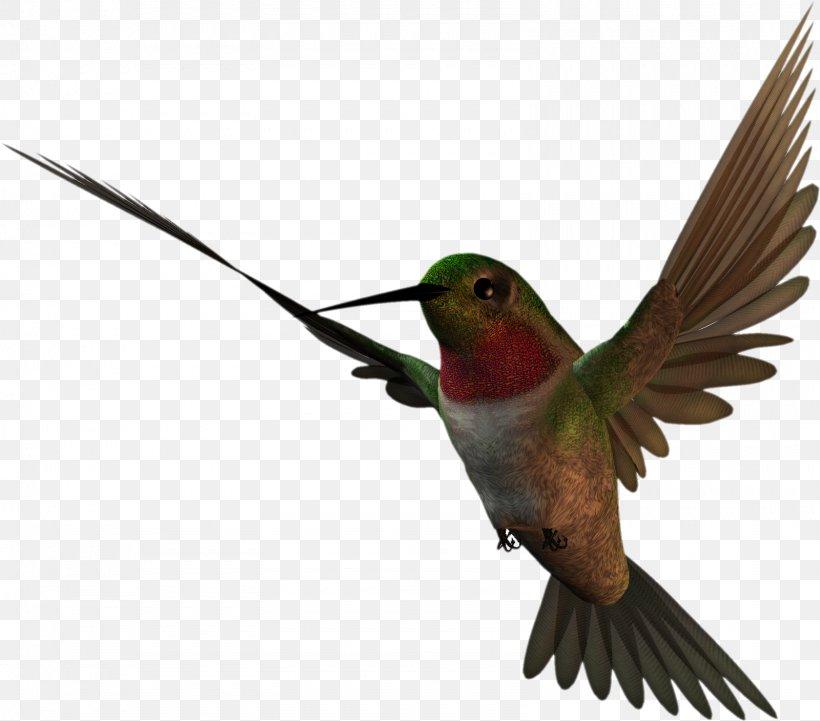 Free Content Clip Art, PNG, 1600x1407px, Free Content, Animal, Beak, Bird, Blog Download Free
