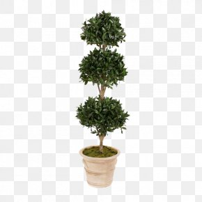 Green Plants Potted Evergreen Tree PNG