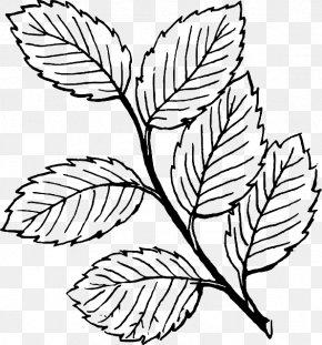 Tree Drawing Outline - Leaf Line Art Clip Art PNG