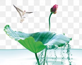 Lotus Birds - Poster Business Advertising PNG