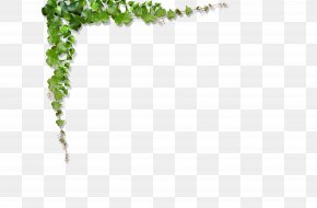 Green Leaves, Vines Climb The Wall - Green Vine Leaf PNG