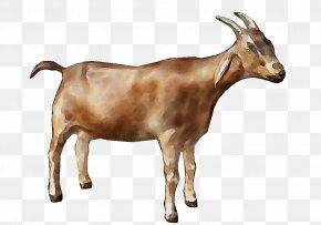 Fainting Goat Alpine Goat Oberhasli Goat Sheep Nigerian Dwarf Goat PNG