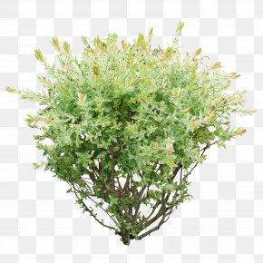 Bush Image - Shrub Plant Clip Art PNG