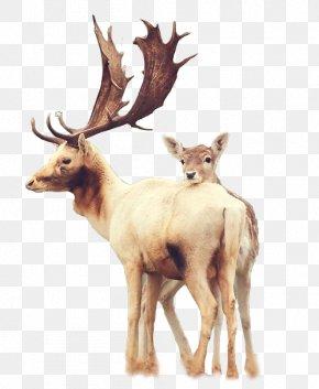 Horned Deer - Samsung Galaxy S6 Deer IPhone 6 Plus Wallpaper PNG