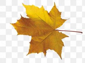 Orange Tree - Leaf Clip Art PNG