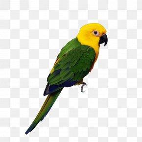 Hand-painted Parrot - Parrot Lovebird Cockatiel Budgerigar PNG
