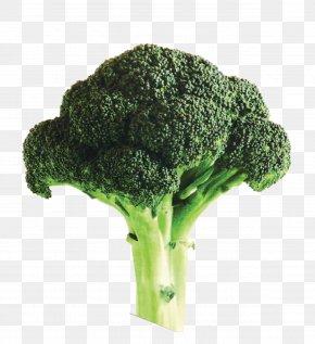 Oversized A Broccoli - Broccoli Soup Organic Food Organic Farming PNG
