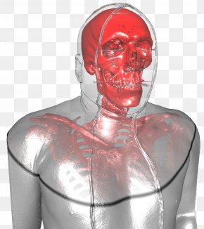 Human Body - Neck Jaw Muscle PNG