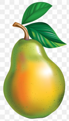 Pear Clipart Picture - Pyrus × Bretschneideri Asian Pear Clip Art PNG