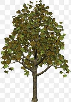Tree Clipart - Tree Autumn Clip Art PNG