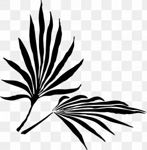 Leaf - Frond Arecaceae Leaf Palm Branch Silhouette PNG
