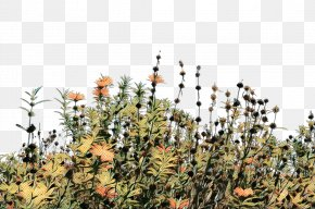 Herbaceous Plant Shrub - Drawing Tree PNG
