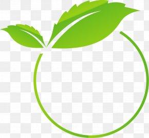 Vector Painted Green Circle - Euclidean Vector Green PNG