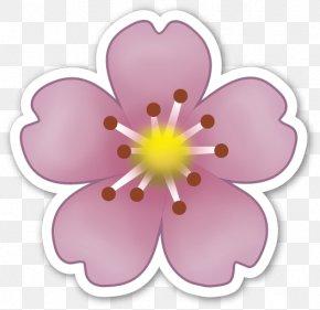 Cherry Blossom - Emoji Sticker Flower IPhone Emoticon PNG