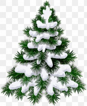 Christmas Tree - Child New Year Tree The Forest Raised A Christmas Tree Quotation PNG