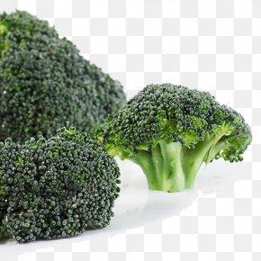 Fresh Broccoli - Broccoli Vegetable PNG
