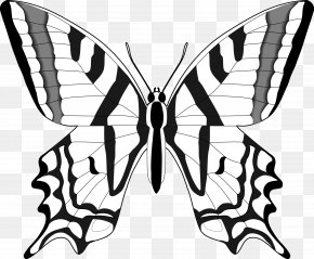 Black And White Butterfly - Butterfly Black And White Clip Art PNG