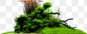 Aqua Design Amano - Vegetation Grasses Houseplant PNG