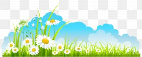 Spring Decor Sky Grass And Camomile Clipart - Spring Clip Art PNG