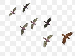 Flying Birds - Bird Flight Columbidae Goose PNG