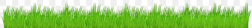 Vetiver Wheatgrass Green Commodity Plant Stem, PNG, 8000x926px, Vetiver, Chrysopogon, Chrysopogon Zizanioides, Commodity, Family Download Free