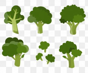 Vector Broccoli - Broccoli Vegetable Clip Art PNG