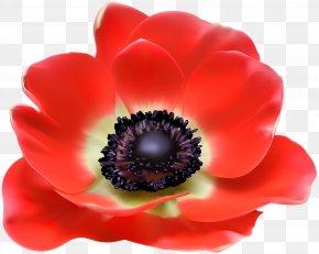 Red Flower Clip Art Image - Poppy Euclidean Vector Clip Art PNG