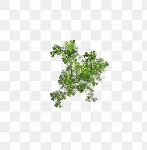 Aqua - Tree Herb Plant Leaf Branching PNG