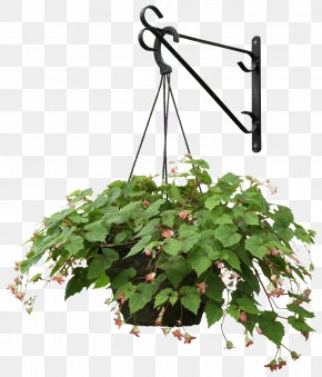 Hanging Plants - Plant Flower Landscape Architecture PNG