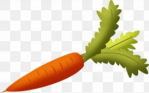 Carrot Image - Carrot Vegetable PNG