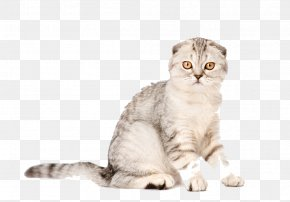 Animals Cat - Scottish Fold Kitten Mouse Scratching Post Cat Tree PNG