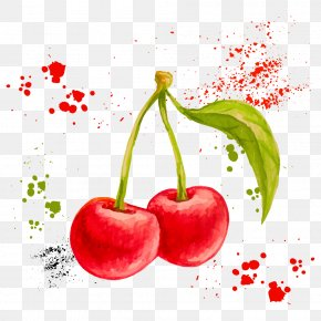 Vector Watercolor Cherry - Watercolor Painting Drawing Fruit Illustration PNG