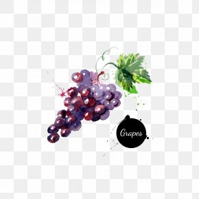 Grape - Grape Watercolor Painting Drawing Royalty-free PNG