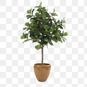 Green Coffee Color Cone Evergreen Bonsai Pots Large Aspera - Fiddle-leaf Fig Common Fig Flowerpot Tree PNG