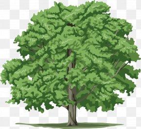 Tree Plan - Tree Plant Clip Art PNG