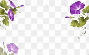 Purple Vines - Flower Ipomoea Nil Watercolor Painting Illustration PNG