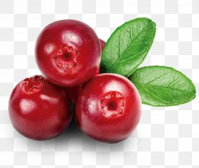Cranberry - Northeastern United States Nutrient Organic Food Cranberry PNG