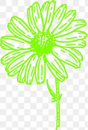 BLOSSOM - Common Daisy Clip Art PNG