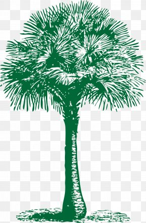 Palms - Arecaceae Asian Palmyra Palm Tree Washingtonia Filifera Date Palm PNG